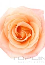 flowers_157_shutterstock_183524186