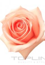 flowers_158_shutterstock_61054105
