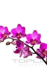 flowers_159_shutterstock_24240847