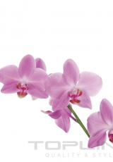 flowers_160