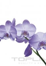 flowers_161_shutterstock_88305835