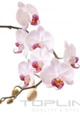 flowers_162_shutterstock_65965726