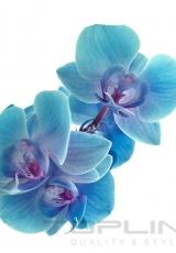 flowers_163_shutterstock_160386653