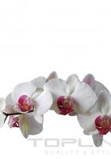 flowers_164