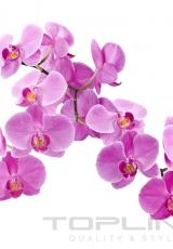 flowers_168_shutterstock_123228046