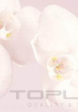flowers_169_shutterstock_103057634
