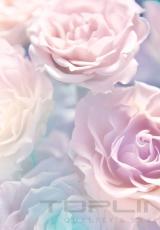 flowers_170_shutterstock_115812106