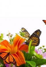 flowers_171_shutterstock_1576435