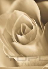 flowers_173_shutterstock_150474671
