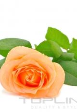 flowers_176_shutterstock_110019713
