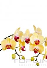 flowers_178_shutterstock_168345752