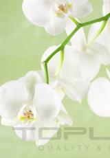 flowers_181_shutterstock_106170632