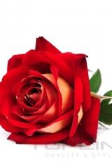 flowers_185_shutterstock_104215625